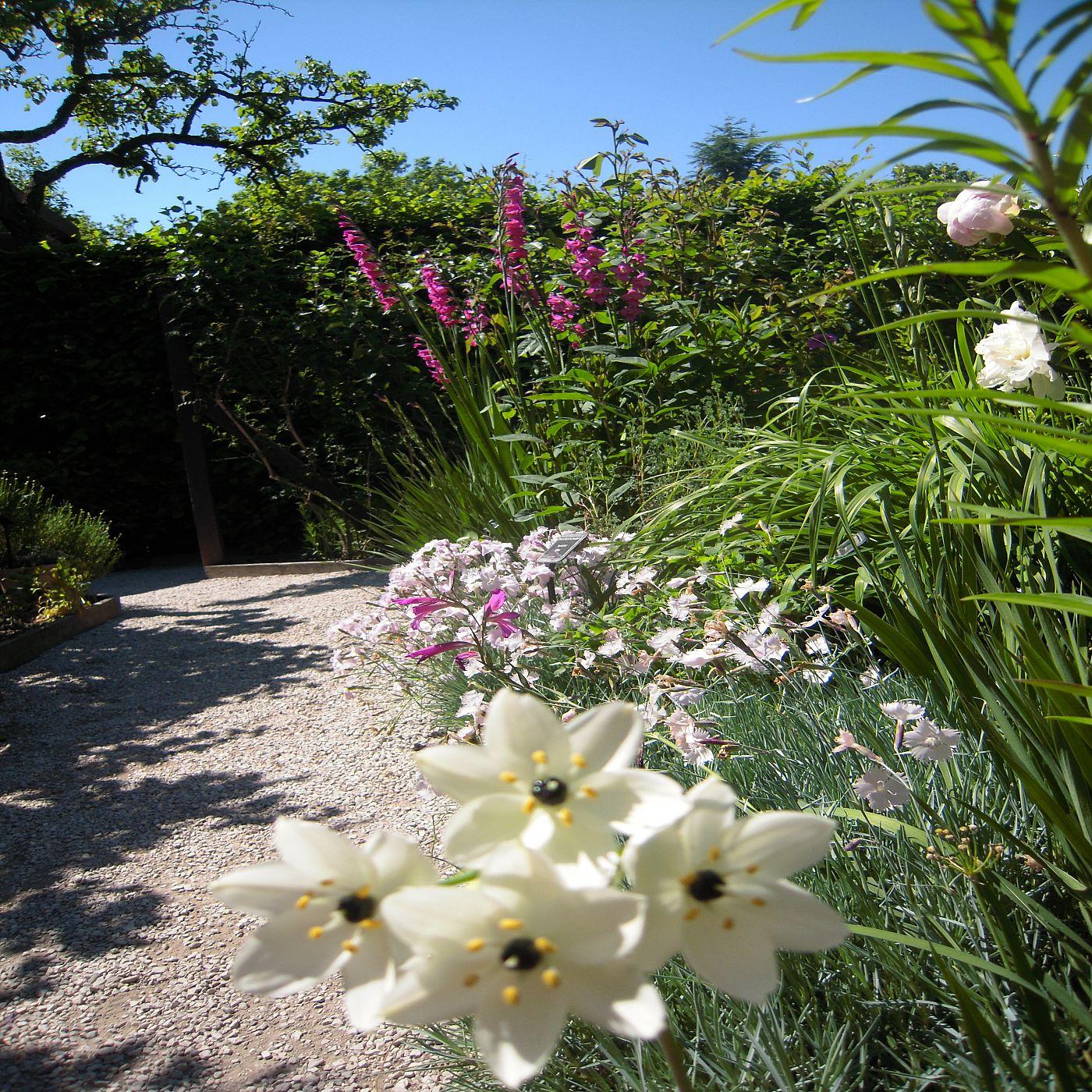 Yvoire cit m di vale et jardin des cinq sens for Jardin yvoire